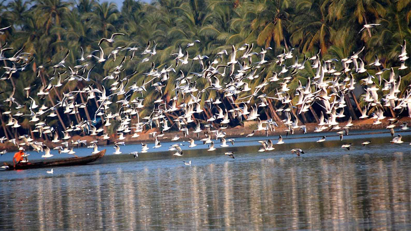 Salim Ali Bird Sanctuary, Goa